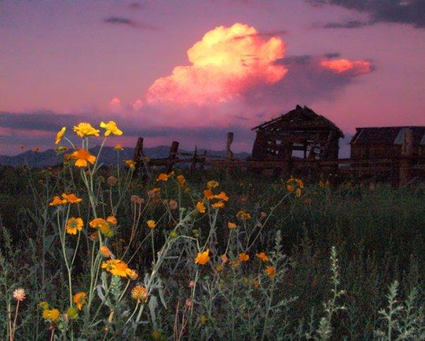 www.kizoa.com_'Ghost Ranch in Bloom'  Sulphur Springs valley, Arizona
