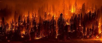 Conservation-wildfire-wildlife-Jeff-Head-via-flickr1